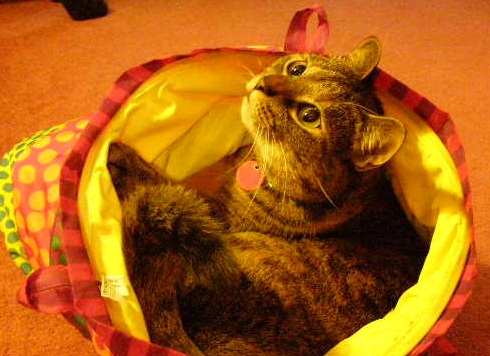 cat with pet sitter in lawrenceville, ga