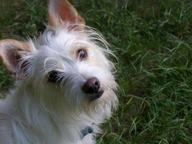 pet sitting client at Good Dog! Coaching & Pet Care
