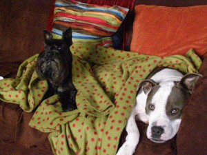 dog boarding lilburn ga, pet sitting snellville ga