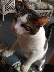 cat sitter in lawrenceville, ga