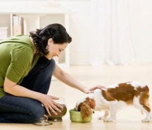 hiring a pet sitter to provide pet care for your dog in your home