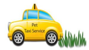 pet taxi service to and from dog boarding