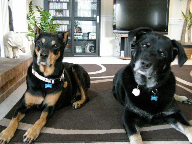 Roxi & Boomer