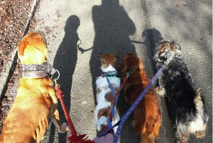 pet sitter walking dogs in buford ga, dog walker suwanee ga