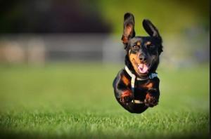 high energy dog boarding in gwinnett, ga