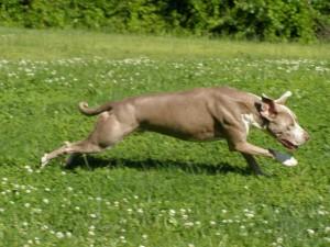 top dog parks in Lawrenceville, ga
