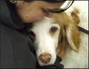 pet loss gwinnett, pet sitter, loss of a pet