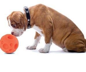 bad dog bored dog food ball