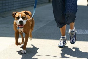 Dog Walking dog walker in duluth, ga