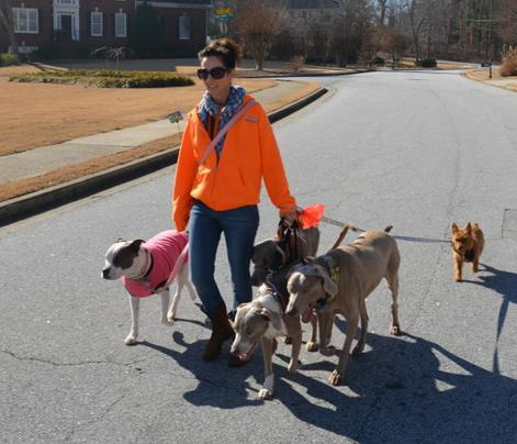Terie Hansen owner of Good Dog! Coaching & Pet Care featured on Atlanta Sounds WABE 90.1