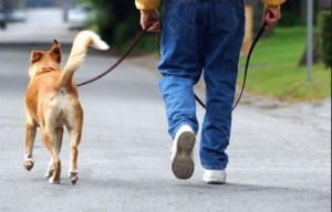 dog walking with pet sitter in duluth, ga