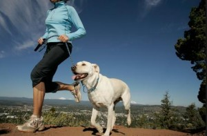 pet sitting, dog walking, duluth provides high energy exercise
