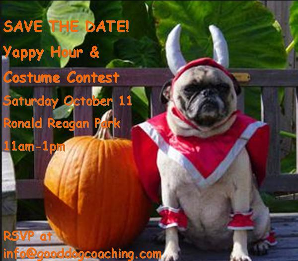 Yappy hour and doggie costume contest at Good Dog! Coaching & Pet Care