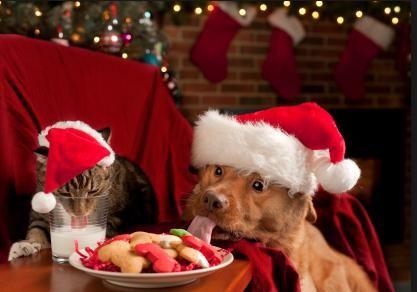 holiday pet danger, pet sitter