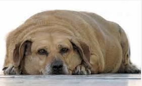 an overweight dog would benefit from more physical activity