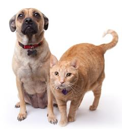 pet sitter with cat and dog checks for heartworms