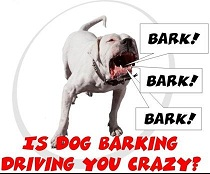 barking dog needs dog training
