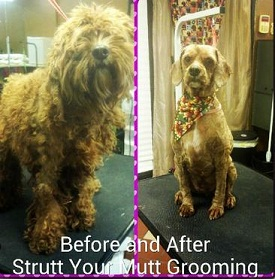Dog grooming before and after in Norcross, GA