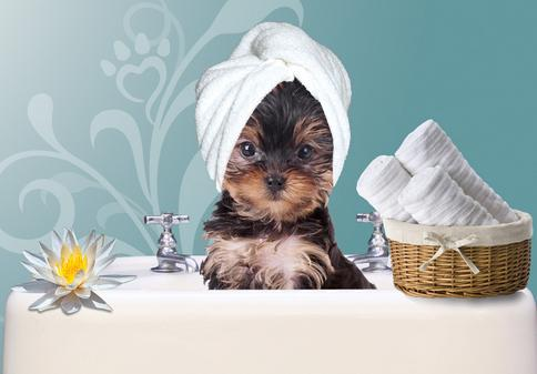 dog grooming in Lawrenceville, GA