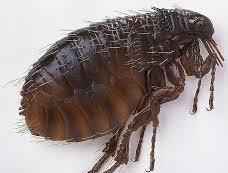 fleas on dogs in suwanee, ga summer pet safety tips