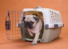 crate training your puppy or dog in dacula, ga