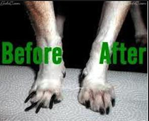 dog's nail trim before and after