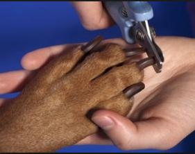 grooming and trimming dog's nails