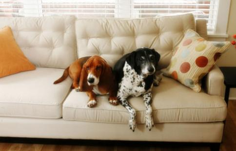 pet care and house cleaning go hand in hand
