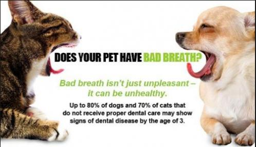 dog and cat dental care in suwanee, ga