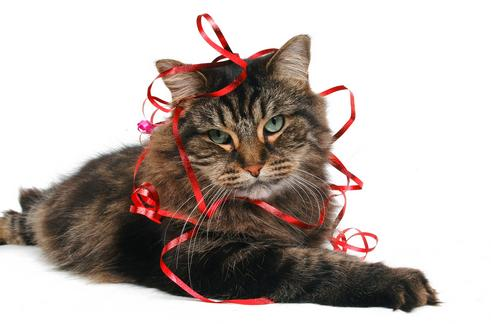 cat with wrapping ribbon in duluth, ga