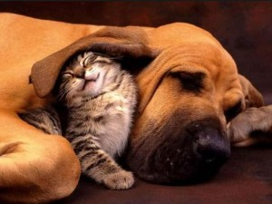 cat and dog pet sitting