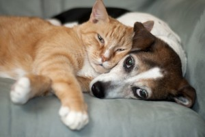 pet sitting dog and cat