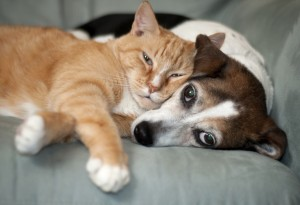 pet sitting, dog walking duluth provides pet care for cats, dogs and exotic pets