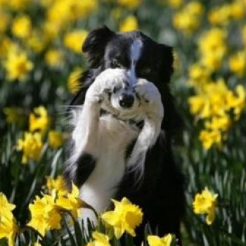 5 Spring Pet Safety Tips