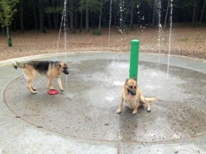 chattapoochee top dog parks in gwinnett