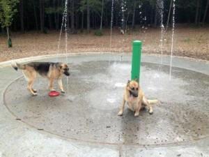 chattapoochee top dog parks in gwinnett