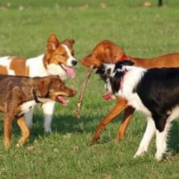 5 Top Dog Parks in Gwinnett County