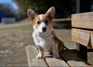 nervous dog at dog parks