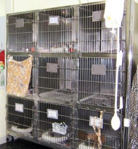 cat boarding at vet wouldn't cat sitting be better?