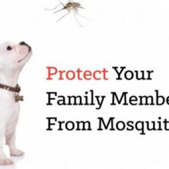 Heartworms, Zika Virus- Choose Your Mosquito Control Company Wisely
