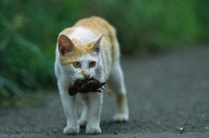 cats causing extinction by catching a bird