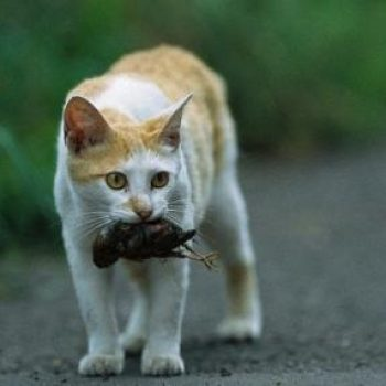 Cats Causing Extinction?