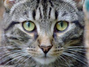 cats causing extinction