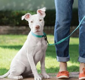 pet sitting dog walking duluth provides dog walker services