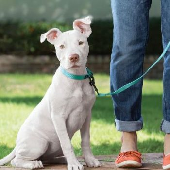 5 Simple Tips  for Getting Your Dog to Behave in Public