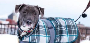 protect pets with outerwear in colder months