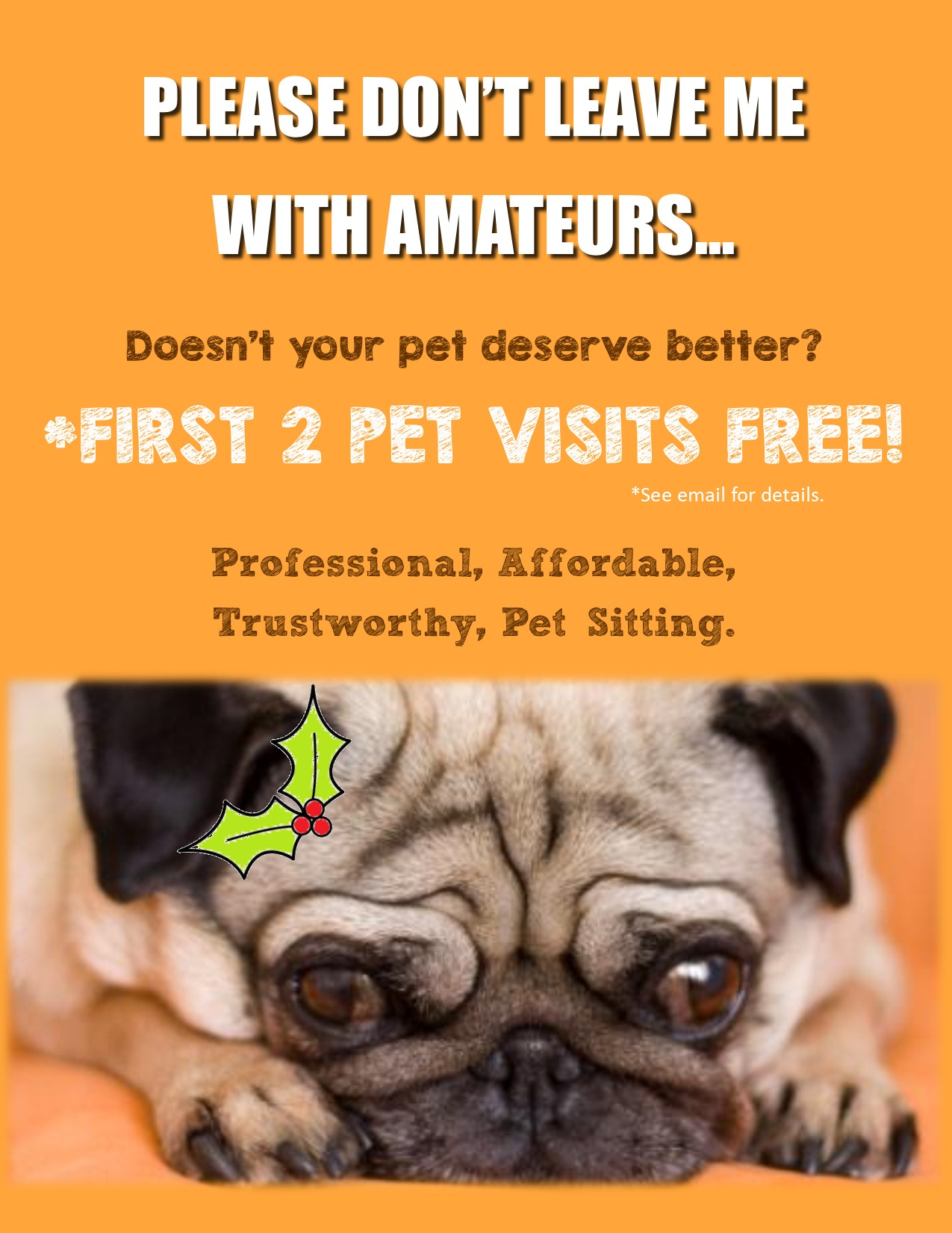 holiday offer 2 free pet sitting visits professional dog walking