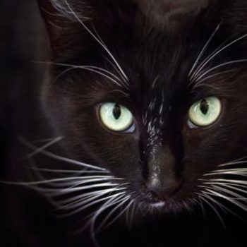 Whisker Fatigue, Is Your Cat Suffering?
