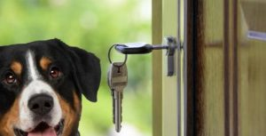 hiring a pet sitter key management