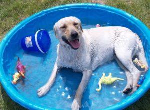 bad dog bored dogdog pool
